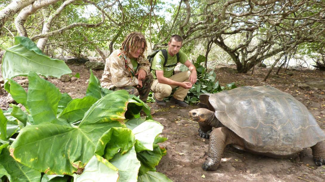 Voluntarios cuidando de tortugas gigantes en nuestro voluntariado ambiental en Galápagos.